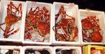 20130722_crabs.JPG